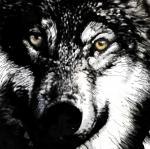 20070706_wolf_c.jpg