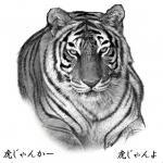 20071015_tiger_a.jpg