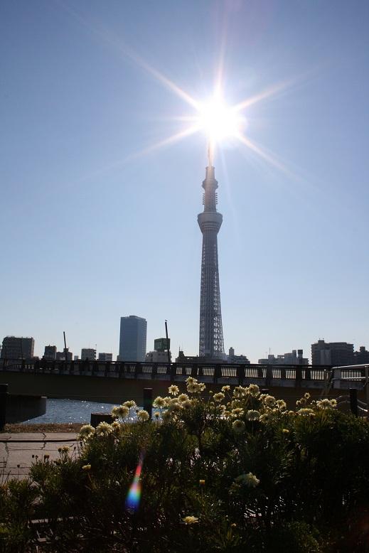 sumidagawa2.jpg