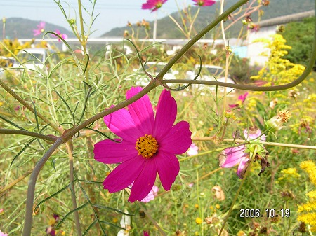 花の癒し効果-2