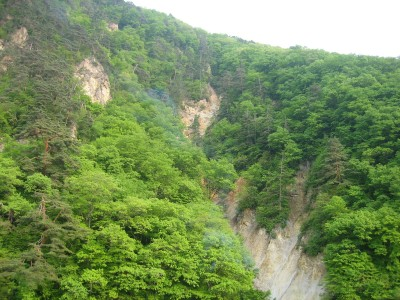 万緑に変わり行く初夏の渓谷