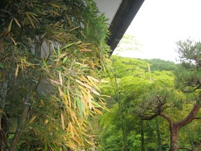 画像 038-竹の春