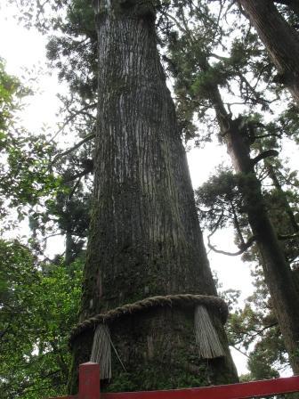 箱根神社矢立の杉