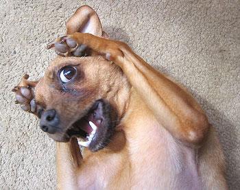 dogscream.jpg
