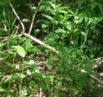 weeds2.jpg