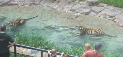 zoo10.jpg