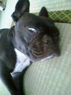 トキデン犬