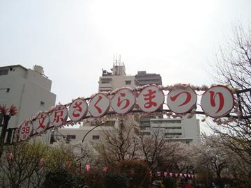 hanami19.jpg