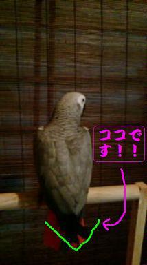 羽根きり○ V