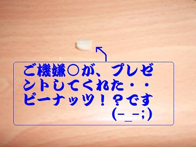 P7100135.jpg