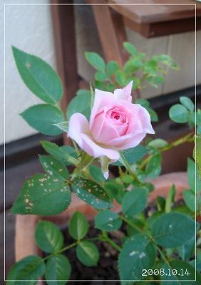 お花も復活!!