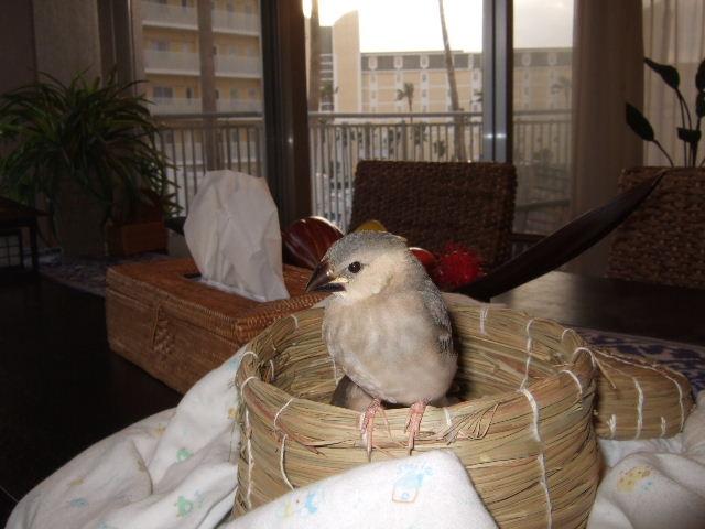 2009_0315文鳥0047
