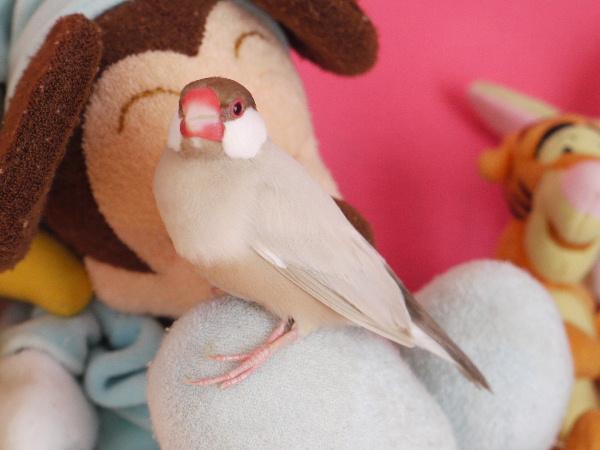 2009_0330lumix文鳥0240