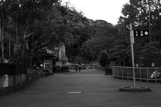 動物園風景-11