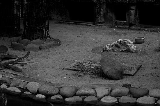 動物園風景-19