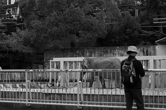 動物園風景-2
