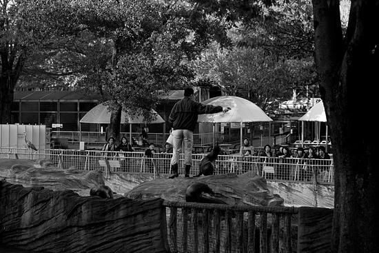 動物園風景2-12