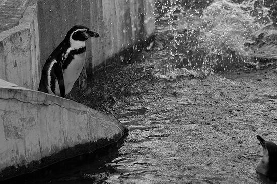 動物園風景2-15