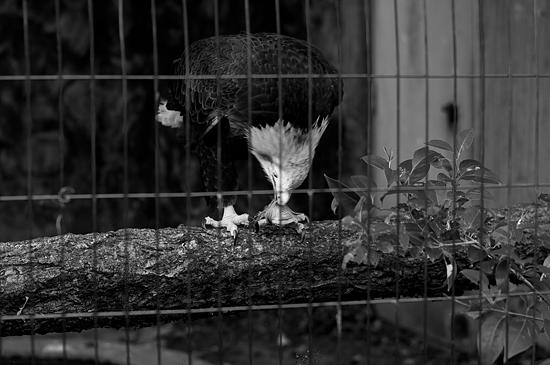 動物園風景2-16