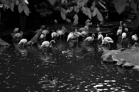 動物園風景2-17