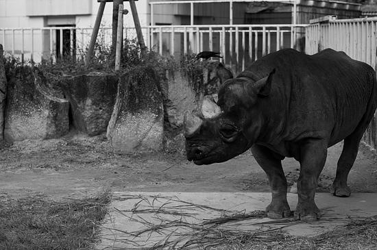動物園風景2-4