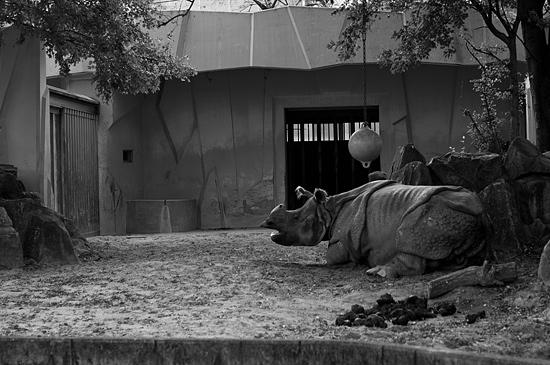 動物園風景2-7