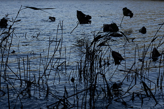 牧野が池-6