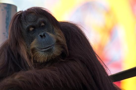 東山動物園-1