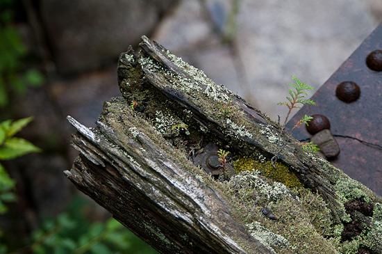 阿寺渓谷小さな芽