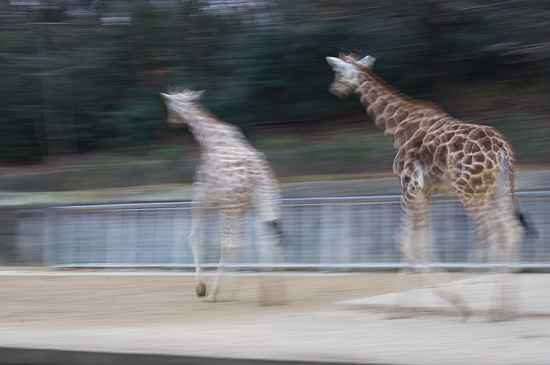 動物園-3