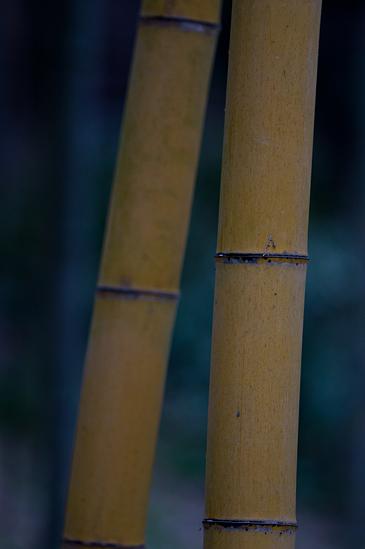 雨の植物園-11