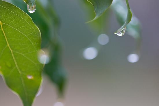 雨の植物園-8