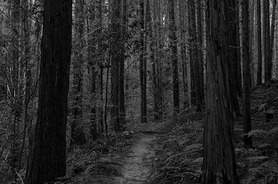 海上の森-7