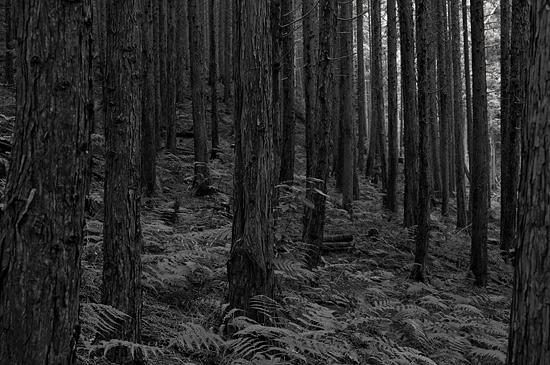 海上の森-8