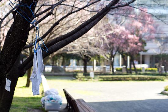 名城桜-9