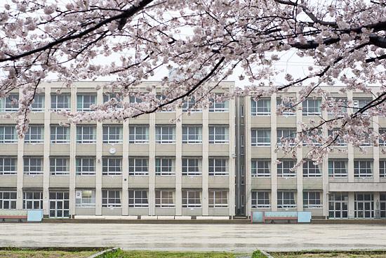 桜便り13-4