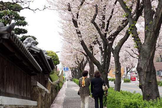桜便り17-9