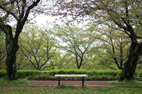 桜便り21-17