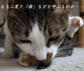 arawareru6_090814.jpg