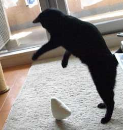 dancingcat1.jpg
