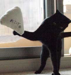 dancingcat3.jpg