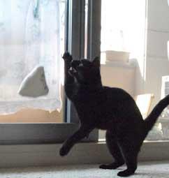 dancingcat4.jpg