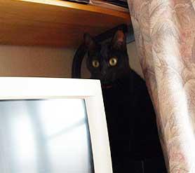 gasya3_2009.jpg