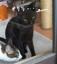 okura3_090518.jpg