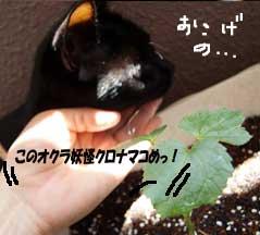 okura6_090518.jpg