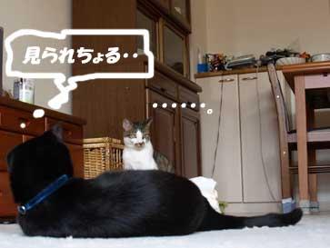 omioko_090331.jpg