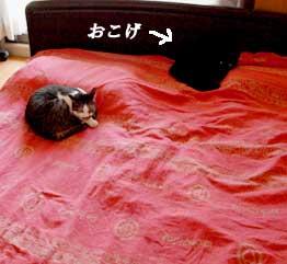 onigiri_090911.jpg