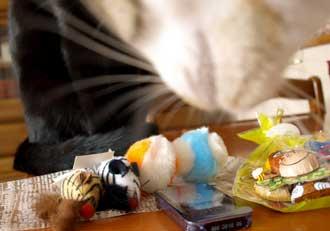 onigirisshuurai_1124.jpg
