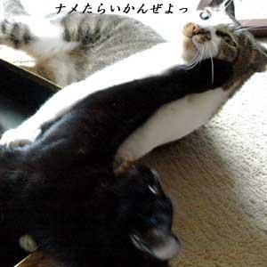 onigiriwar4-1_090806.jpg