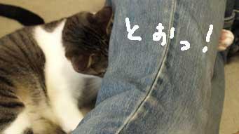 tsukkomi2.jpg
